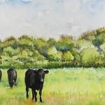 farm field sm