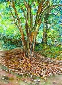 tree roots sm