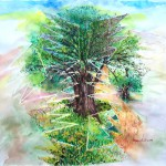 mystical Olive Tree 2019.jpg